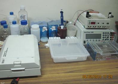 Gel Electrophoresis [Stratagene, Tarson], AFIGE [BIORAD], Semi Dry Blotter [BIORAD], PCR [Perkin Elmer]